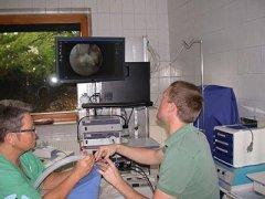 Endoskopie Maulhöhle Kaninchen