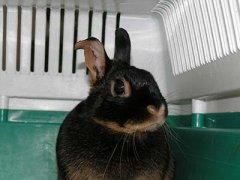 Kaninchen Ohrverletzung
